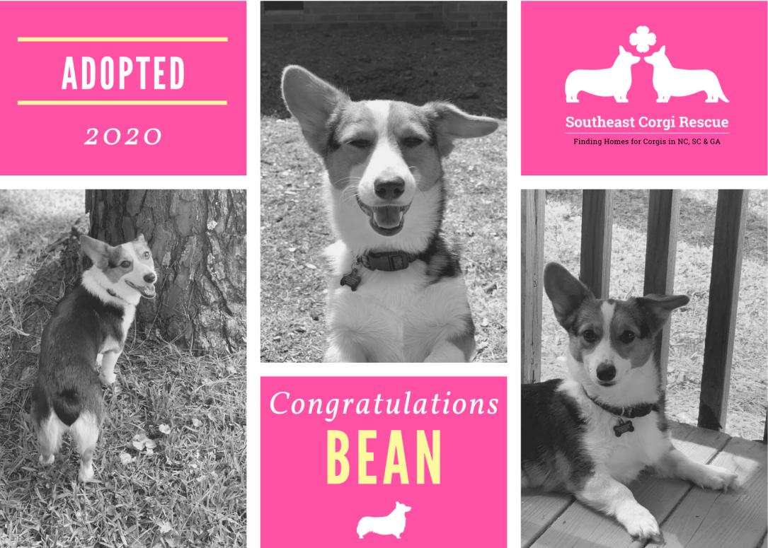 Bean adoption announcement