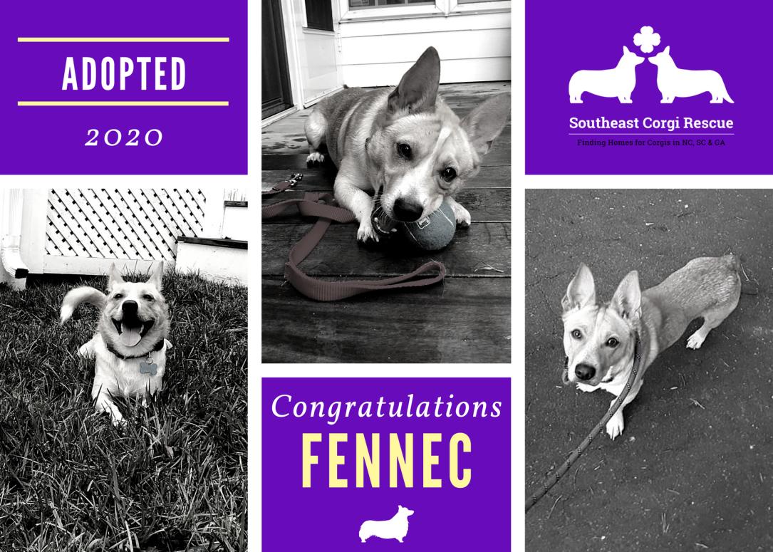 Fennec adoption announcement