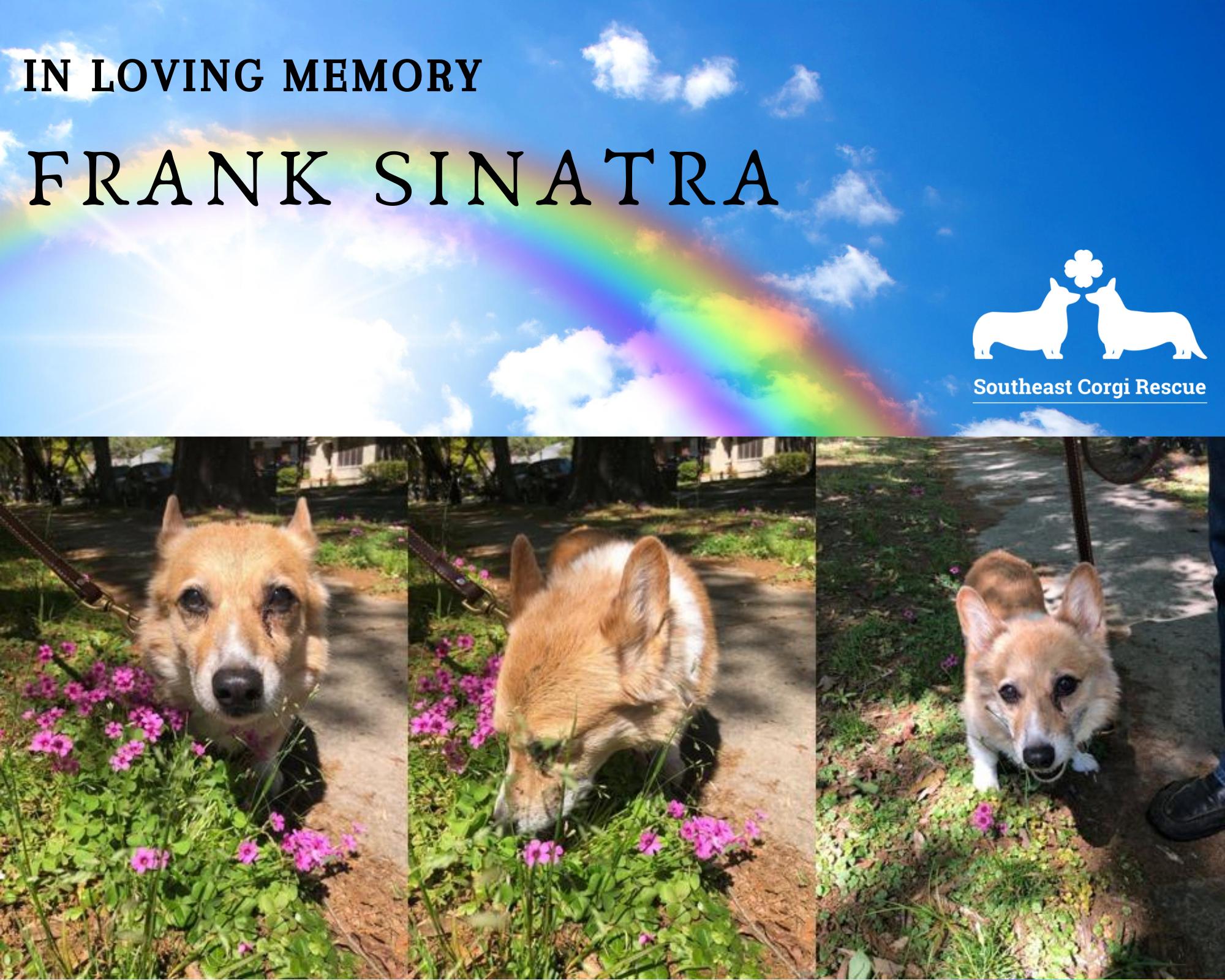 In loving memory - Frank Sinatra