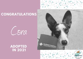 cora-adoption-announcement