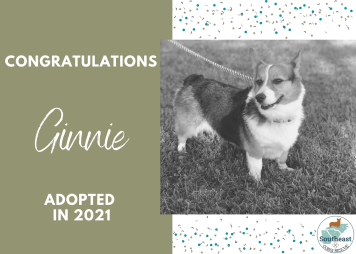 ginnie-adoption-announcement