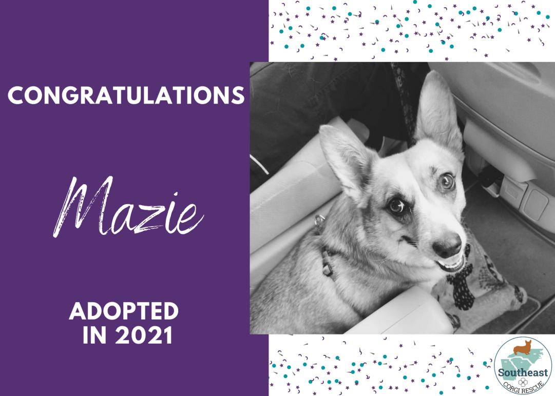 mazie-adoption-announcement