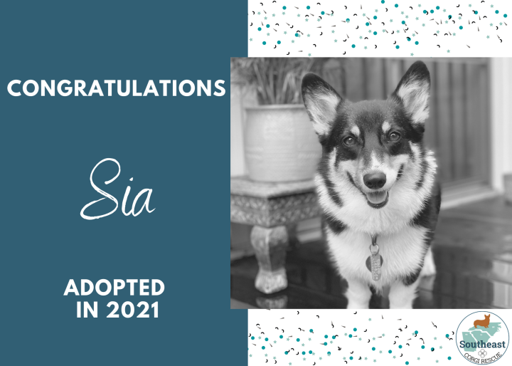 sia-adoption-announcement