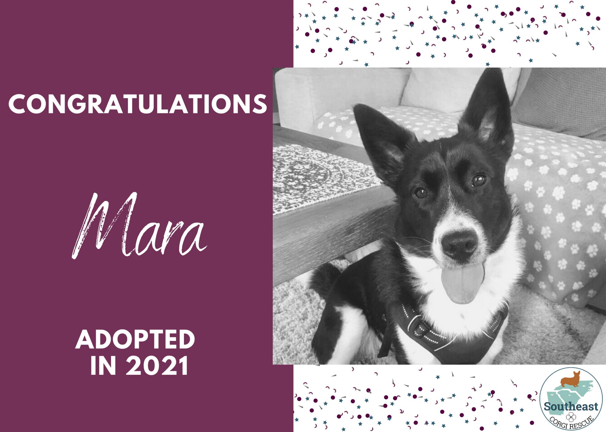 Mara Adoption Announcement